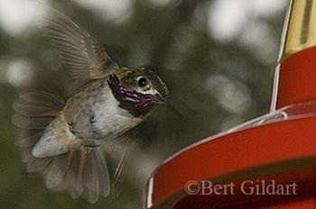 Feeders help with avian homecomings