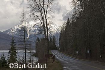 Snow lingers in Glacier