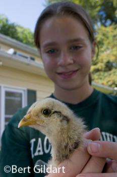 Sprinkles, an Ameraucana chick, and Sarah