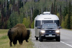 AirstreamBison